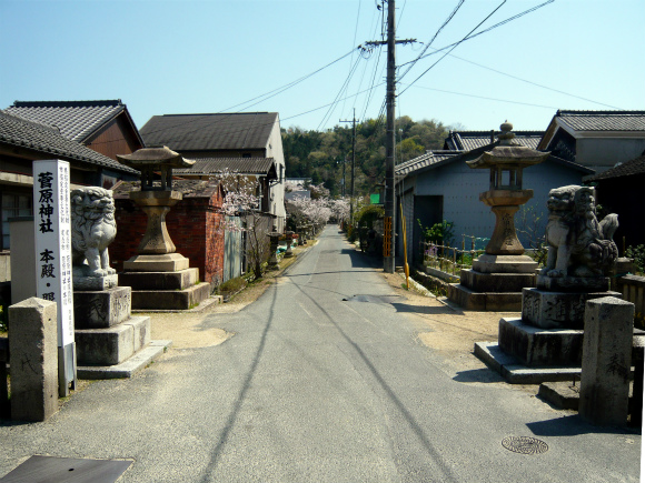 菅原神社の桜