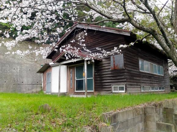 高龗宮の桜