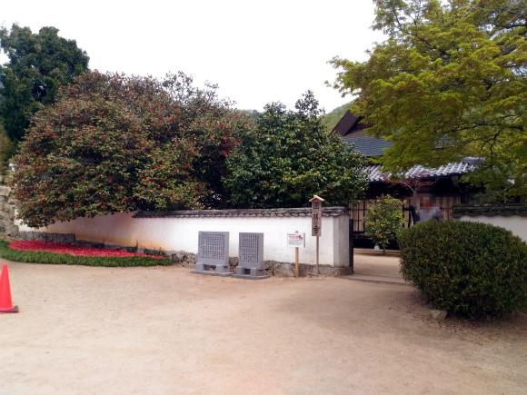 圀勝寺の落ち椿