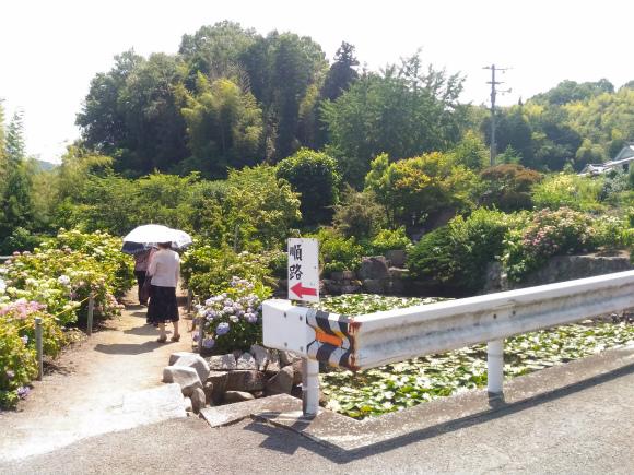 神宮寺のあじさい園