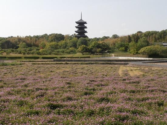 五重塔とレンゲ畑