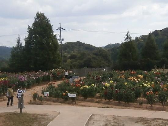 世羅高原農場のダリア園