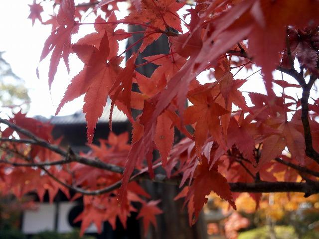 仏殿前の紅葉